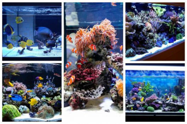 Como montar um negócio de aquários passo a passo